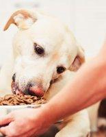 Выбираем сухой корм для собаки
